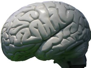 Gjerne en hjerneillustrasjon
